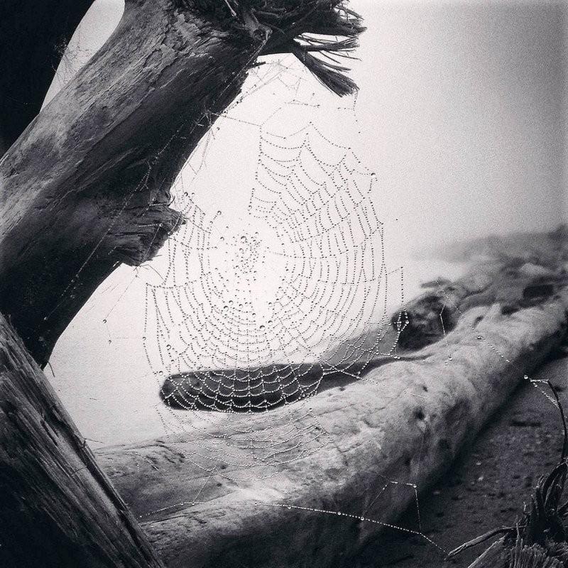 Nature 组冠军 - Yvonne Naughton(美国)